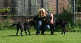Dog Boarding Kennels Carlisle Cumbria