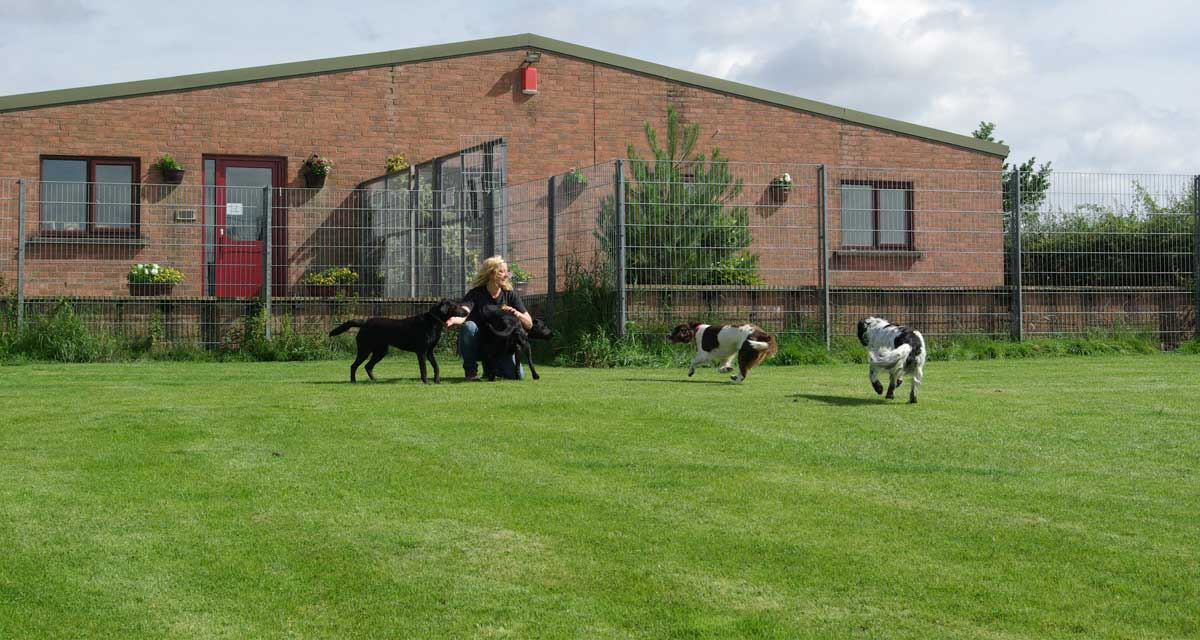 Grays Kennels - Dog Kennels Carlisle Cumbria